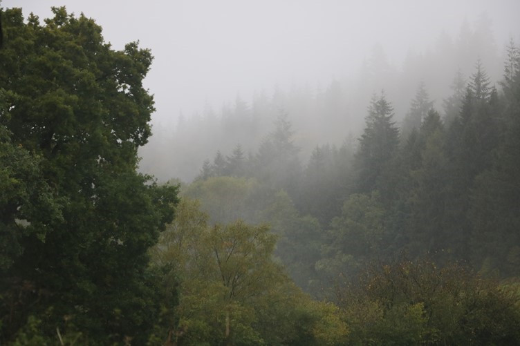 The Mist overlooking the Mortimer Forest
