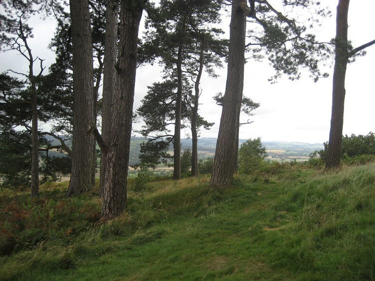 On the Hillside near Croft Ambrey Hill Fort