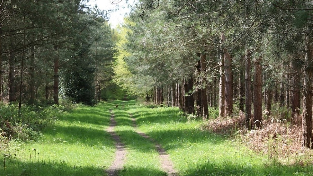 Down a wandering avenue