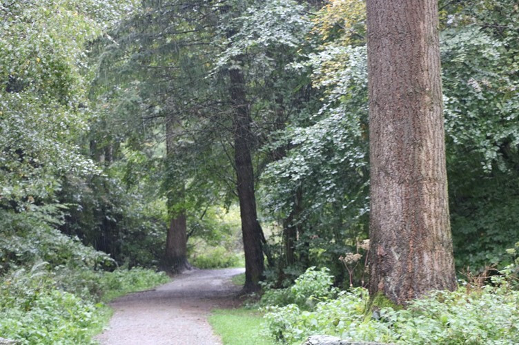 One of the many paths heading into the Forest