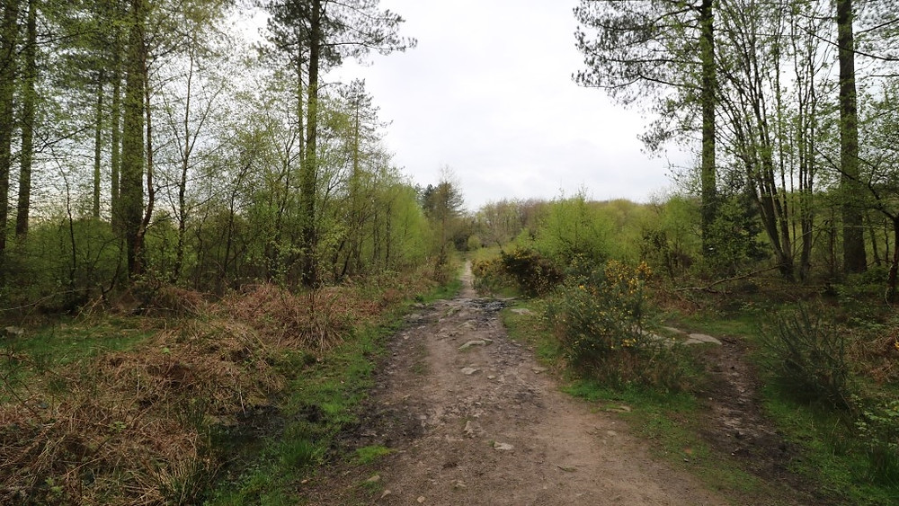 A Rough Trackway in the Heathland