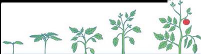 Жидкие и водорасворимые удобрения для всех стадий разития растений в Молдове. PRODCOM FIT SRL