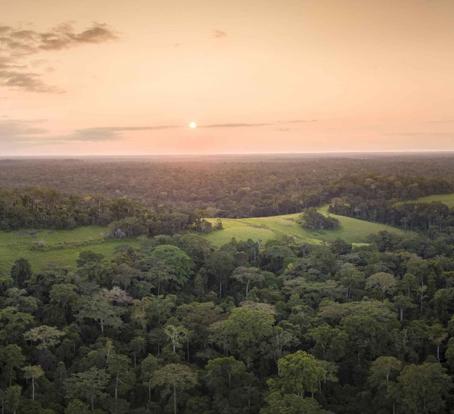 Fondation d'entreprise : Quand les entreprises du luxe se mobilisent pour l'environnement