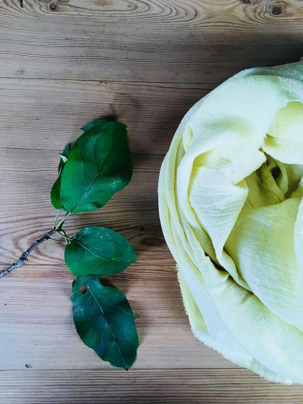 liście jabłoni - apple-tree leaves_03