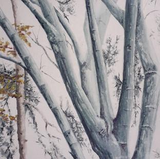 Mt Favorite Tree in Sherringham