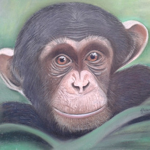 Chimpanzee-pastel.jpg