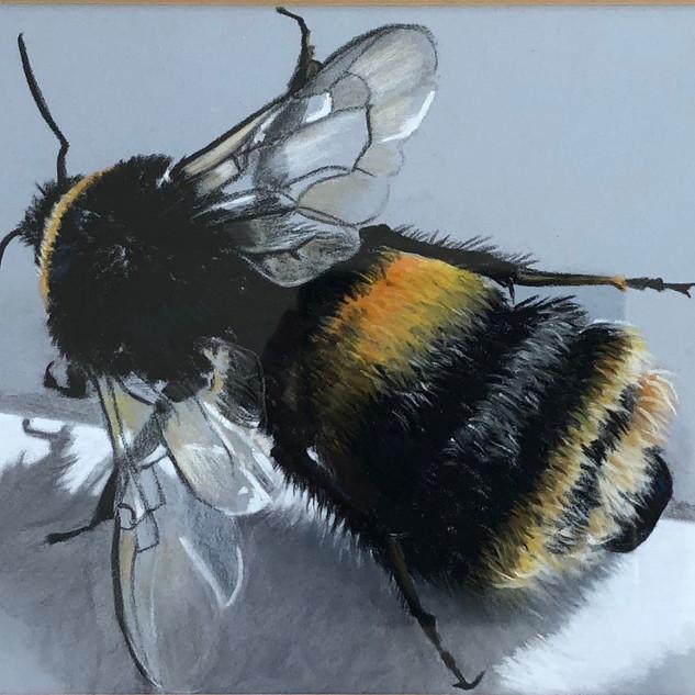bee on a ledge