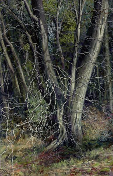 Tile Wood Border.jpg
