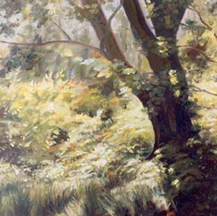 """Forest Ferns"""
