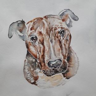 Jenny's Dog