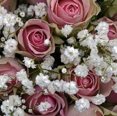 roses-1420719_1920.jpg