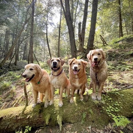Charlie, Stella, Sadie, Tulsi