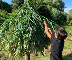 seb making bamboo unbrella