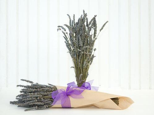 Grosso Lavender Bunch