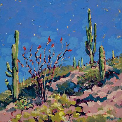 Lake Pleasant Cactus