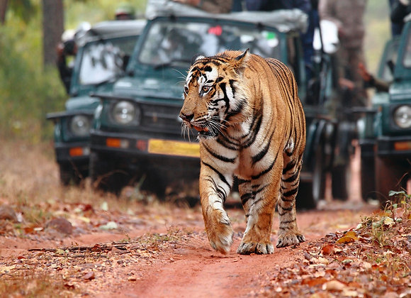 Uttarakhand Wildlife Tour (5N/6D)-PER PERSON
