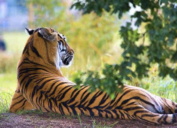 Premium Goa with Bondla Wildlife Sanctuary
