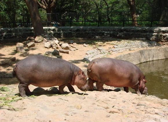 Budget Goa with Bondla Wildlife Sanctuary