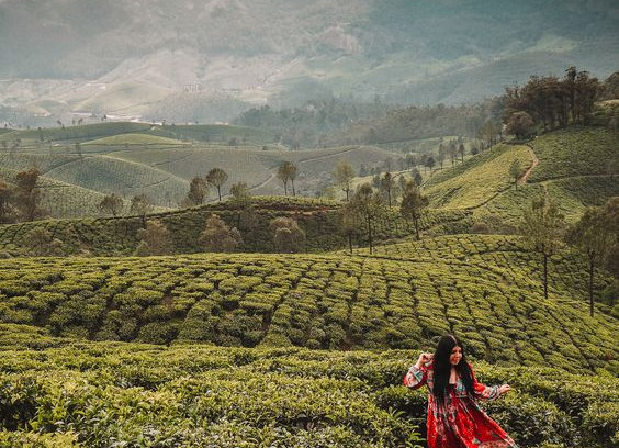 Luxurious Short break to Munnar & Thekkedy
