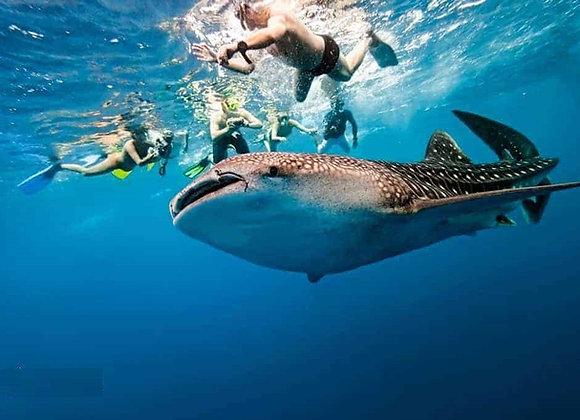 Bohol and Cebu with Whale Watching