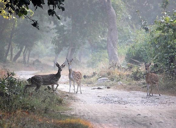 Wildlife Explorer with Rishikesh & Rajaji National Park