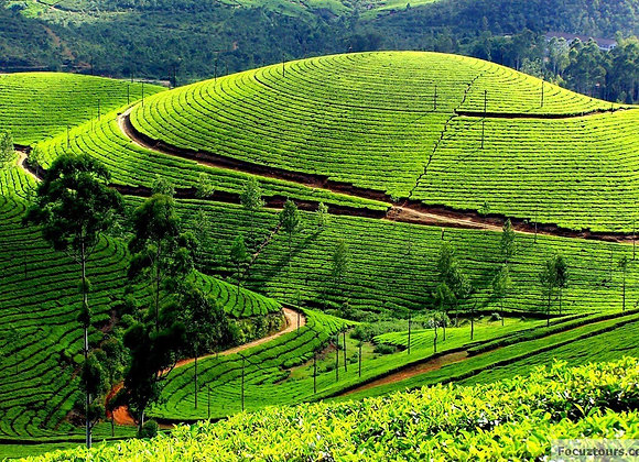 Coimbatore-Ooty-Coonor Super Saver