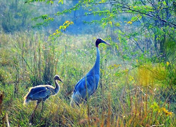 Goa Budget Holiday with Dr. Salim Ali Bird Sanctuary