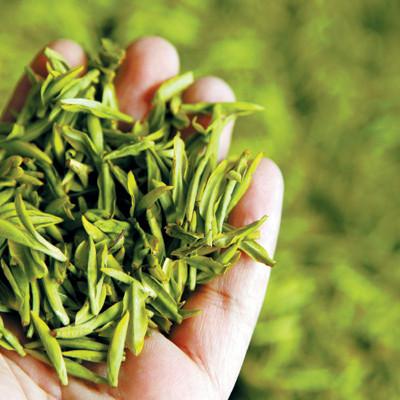 Early Tea Chase, Mingqian Tea/Pre-Qingming Tea