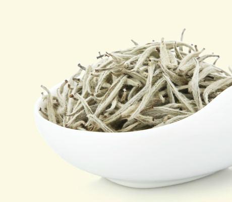 White Pekoe Silver Needle