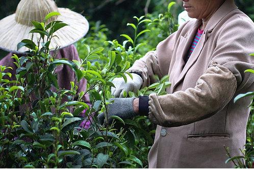 23/C varieties of Wuyi Rock Tea/ Wuyi rock-essence tea, Wuyi Tea farm Wholesale