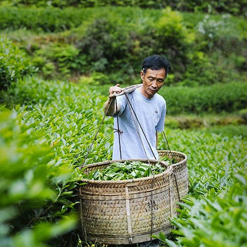 23/A varieties of Wuyi Rock Tea/ Wuyi rock-essence tea, Wuyi Tea farm Wholesale