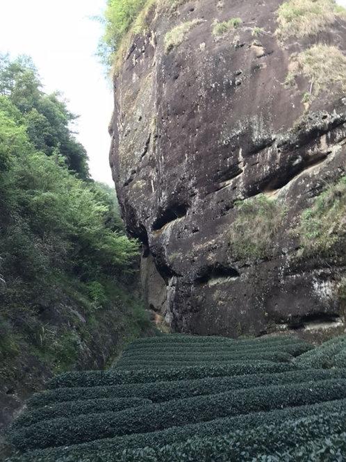 23/B varieties of Wuyi Rock Tea/ Wuyi rock-essence tea, Wuyi Tea farm Wholesale