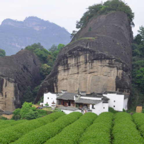 Wuyi Rock Tea/Wuyi Yancha, Chinese Tea Farm Wholesale