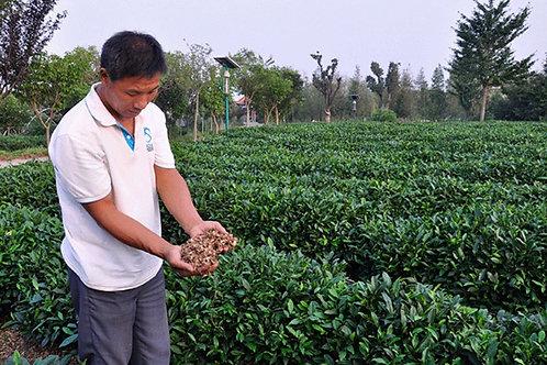 Rizhao Green Tea & Black Tea(Organic Tea), Tea farmer/Tea Maker Direct Wholesale