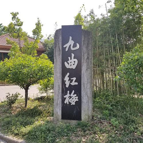 Jiu Qu Hong Mei Black Tea/Long Jing Black Tea, Tea farmer/Tea Maker Wholesale