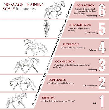 Dressage training scale of the horse's gaits.