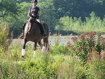 Sarah O'Neill offers dressage lessons and riding lessons throughout Massachusetts