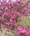 kurs_4-IMG_075321-kirschblüten.jpg