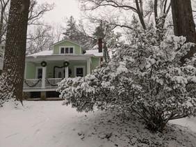 Snow covered forsythia Jan 2021.jpg