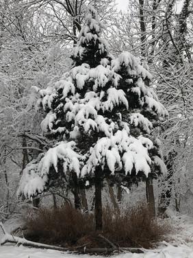 Moss_snow.jpg