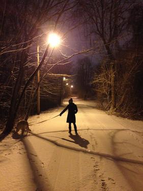 snowydogwalk.jpeg