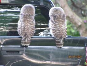 owls5-1.jpg
