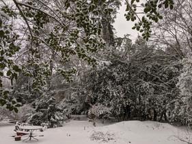 Winter Wonderland Jan 2021.jpg