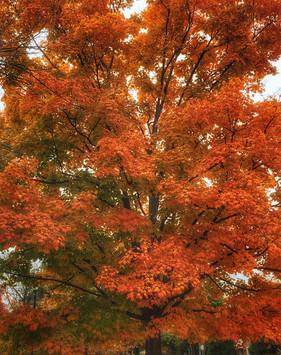 autumn.jpeg