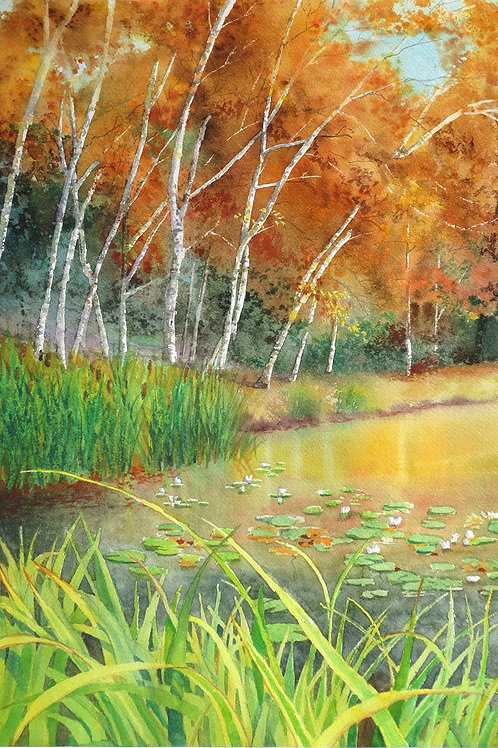 Hidden Lake Gardens Birches Print