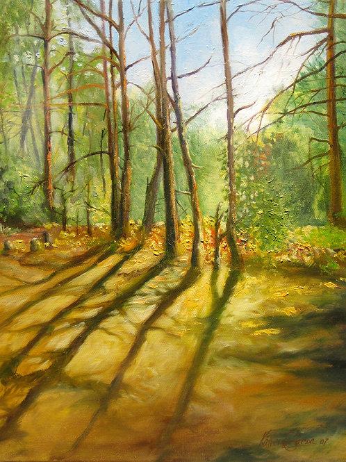 Pine Shadows, Michigan Print