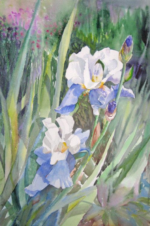 Bluebeard (Stairway to Heaven) Iris Print