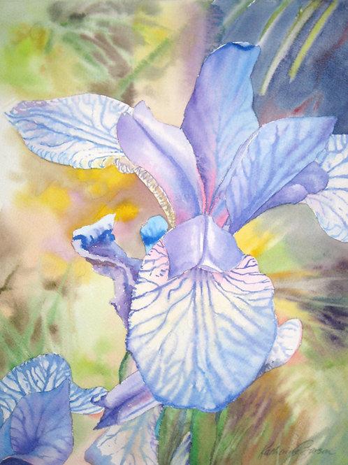 Shaker's Prayer Iris Print