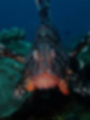 Lion fish closeup_edited.jpg