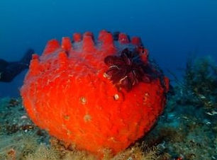 Sponge and feather star_edited.jpg